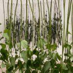 OFFENES MÜHLEN- ATELIER -  WILD PLANTS